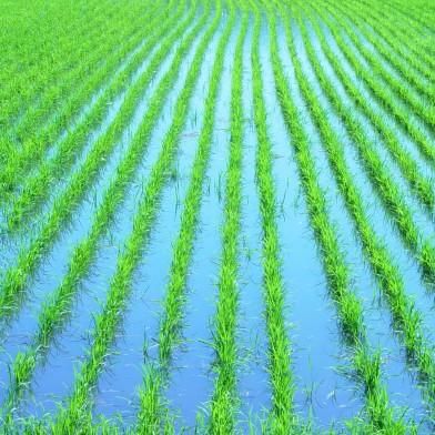 Ampliar a imagem - Excesso de chuva causa prejuízos para produtores de SC e do RS.